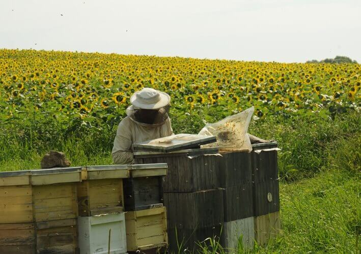 About Honey Tradition Raw Honey