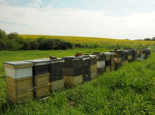 Honey Tradition Bee Hives