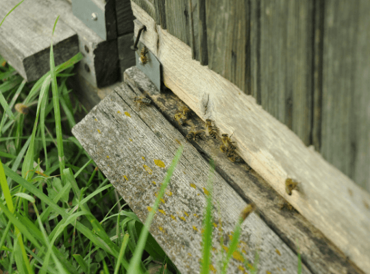 bees flying into hives